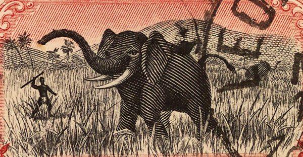kongo-polowanie