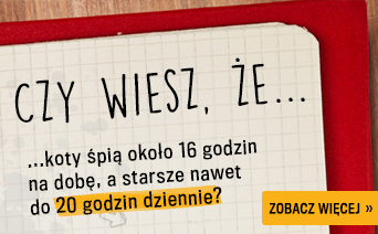 czywiesz_koty_ks